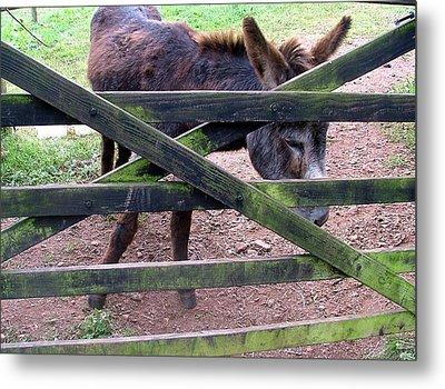 Donkey Ready Metal Print by Mindy Newman