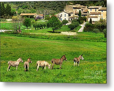 Donkeys In Provence Metal Print by Olivier Le Queinec