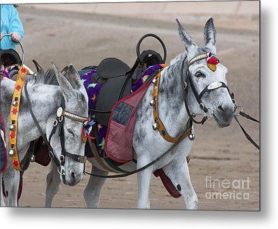 Donkeys On Blackpool Beach Metal Print