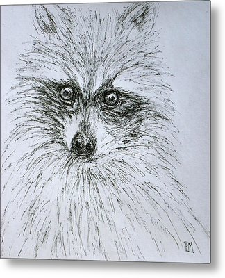 Don's Racoon Metal Print by Pete Maier