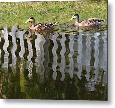 Don't Fence Us In Metal Print by Kathy M Krause