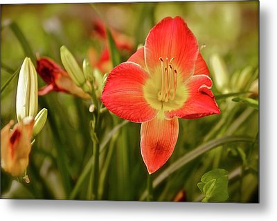 Don't Forget Me Lily Metal Print