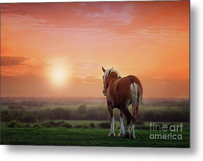 Don't Let The Sun Go Down On Me Metal Print by Tamyra Ayles