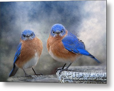 Metal Print featuring the photograph Don't Ruffle My Feathers by Bonnie Barry
