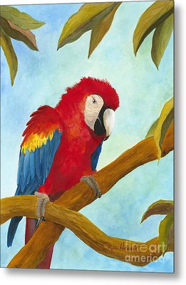 Dont Ruffle My Feathers Metal Print by Phyllis Howard