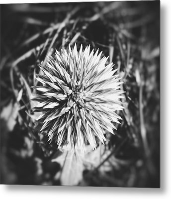 Don't Touch Me Metal Print by Karen Stahlros