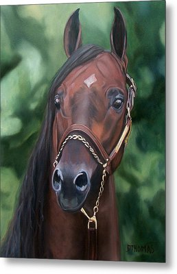 Dont Worry Saddlebred Sire Metal Print by Donna Thomas