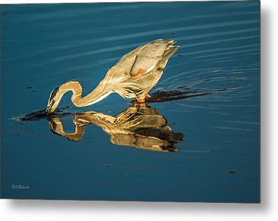 Double Dipper Metal Print by Bill Roberts