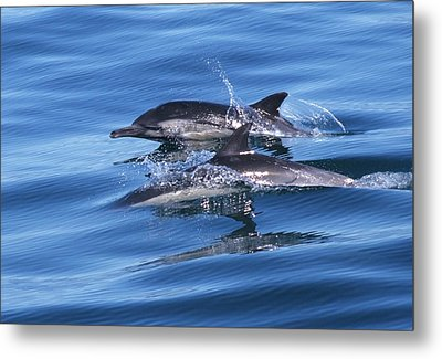 Double Dolphins And Reflections Metal Print