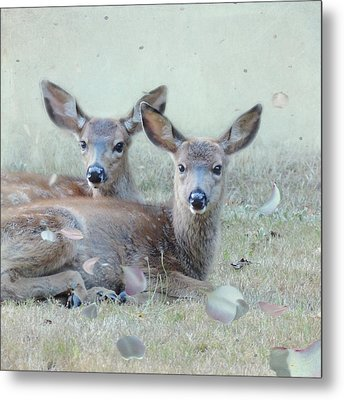 Metal Print featuring the photograph Double Gaze by Sally Banfill