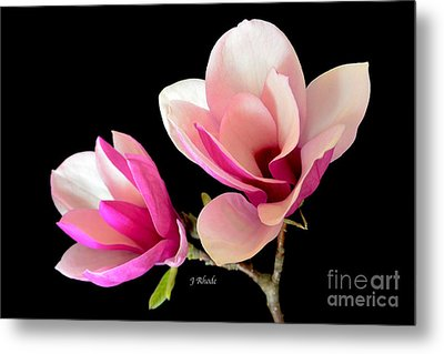 Double Magnolia Blooms Metal Print