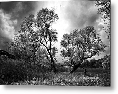 Double Tree Metal Print