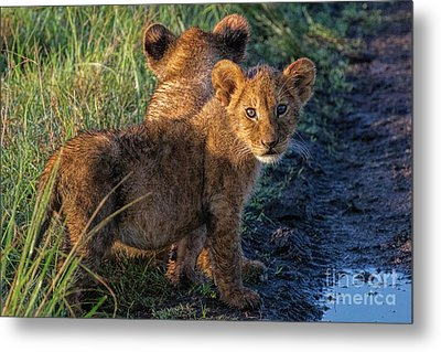 Metal Print featuring the photograph Double Trouble by Karen Lewis