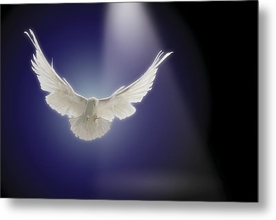 Dove Flying Through Beam Of Light Metal Print by Comstock Images