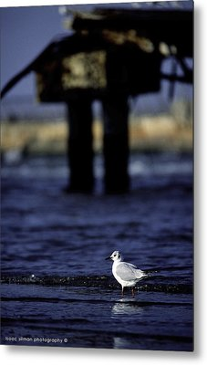 Dove In Theold Port Of Tel  Aviv Metal Print by Isaac Silman