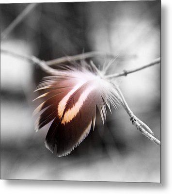 Dove Tail Metal Print by Russell Styles