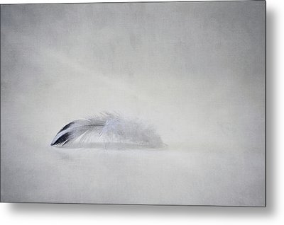 Down Feather Metal Print by Scott Norris