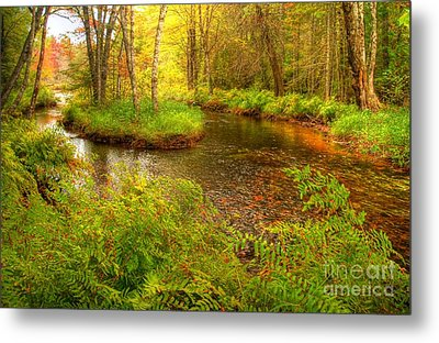 Metal Print featuring the photograph Downeast Fall Stream by Alana Ranney