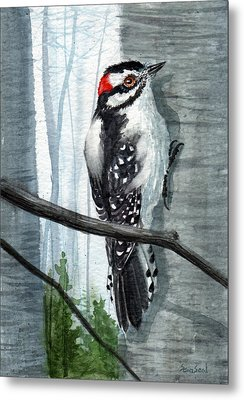 Downey Woodpecker Metal Print by Sean Seal