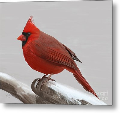 Downy Winter Male Metal Print