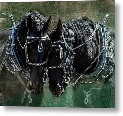 Metal Print featuring the photograph Draft Horses by Mary Hone