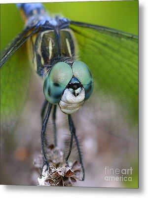 Bug-eyed Metal Print