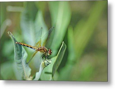 Dragon Fly 1 Metal Print