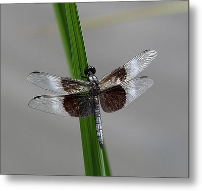 Dragon Fly Metal Print by Jerry Battle