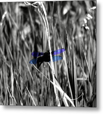 Dragon Fly Metal Print by Jimmy Ostgard