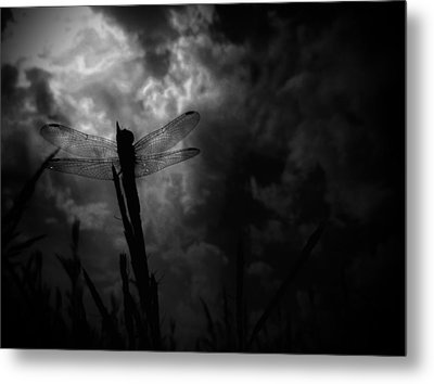 Dragon Noir Metal Print by Tim Good