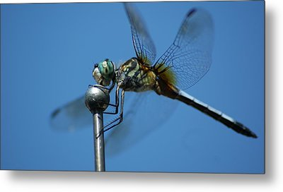 Dragonfly 1 Metal Print by Maria  Wall