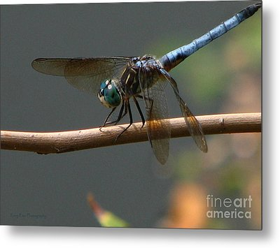Metal Print featuring the photograph Dragonfly 2010 by Roxy Riou
