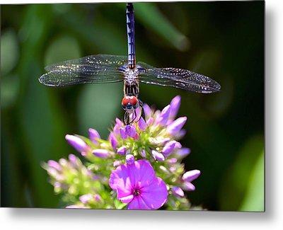 Dragonfly And Phlox Metal Print
