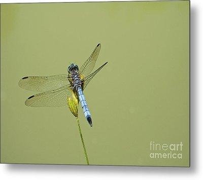 Dragonfly Metal Print by Andrew Kazmierski