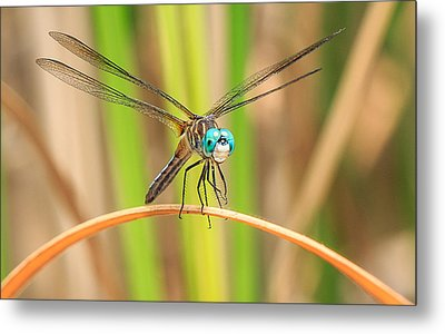 Dragonfly Metal Print by Everet Regal