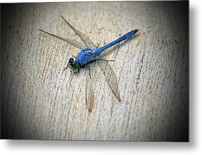 Dragonfly Metal Print by Jean Haynes