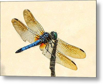 Dragonfly Metal Print by Jim Moore