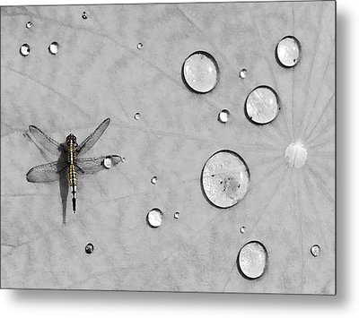 Dragonfly Metal Print by Karl Manteuffel