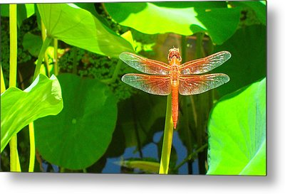 Dragonfly Metal Print by Mark Barclay