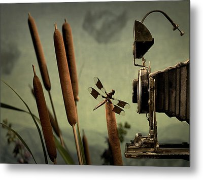 Dragonfly Metal Print by Mark Wagoner