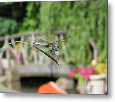 Dragonfly Metal Print by Michael Krek