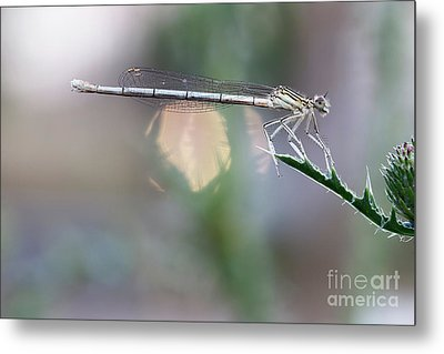 Metal Print featuring the photograph Dragonfly On Leaf by Michal Boubin