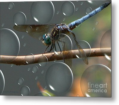 Metal Print featuring the photograph Dragonfly Opera by Roxy Riou