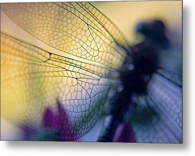 Dragonfly Wings Metal Print by Susan Leggett