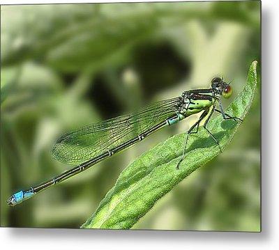 Dragonfly1 Metal Print by Svetlana Sewell