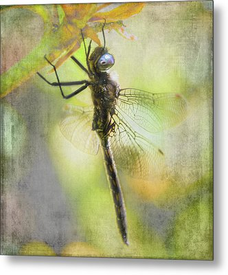 Dragonfly Resting - Textured Metal Print