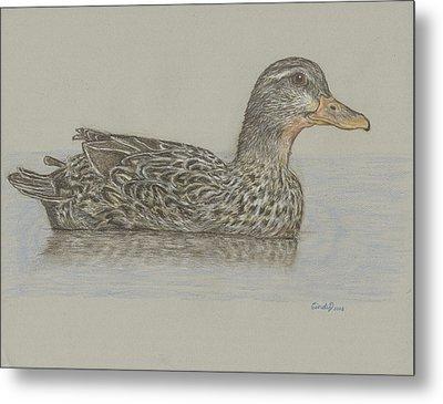 Drake Duck Metal Print by Cynthia  Lanka