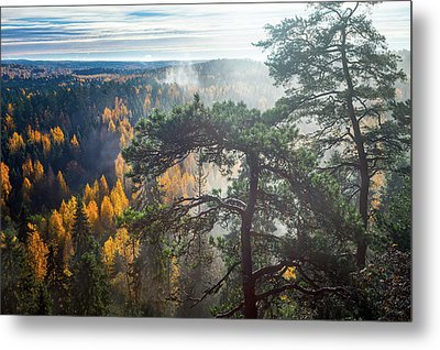 Dramatic Autumn Forest With Trees On Foreground Metal Print