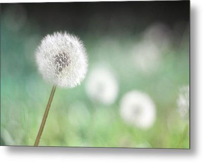 Wish Come True II Metal Print by Amy Tyler