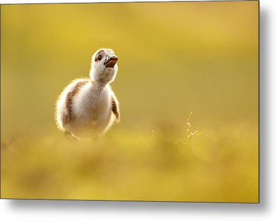 Dream Duckie _egyptian Gosling Metal Print by Roeselien Raimond